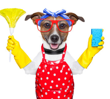 Dog dressed as a housewife with cleaning materials